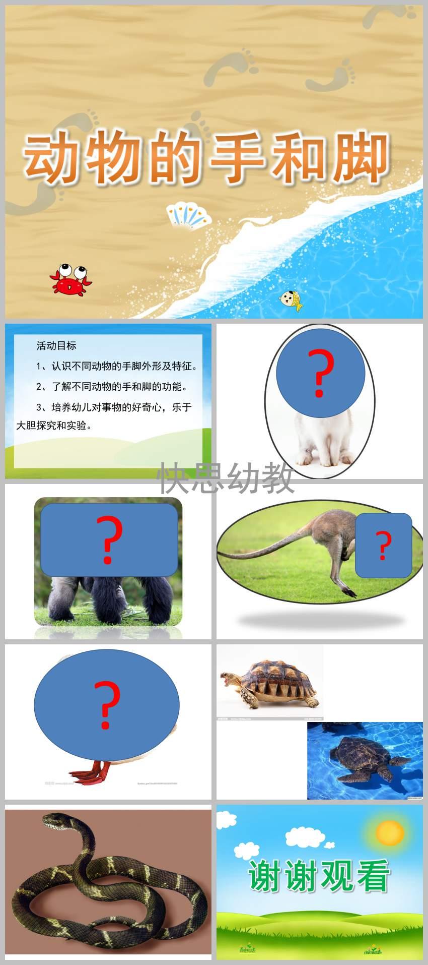 幼儿园小班科学 动物的手和脚 PPT课件教案下载 快思幼教网