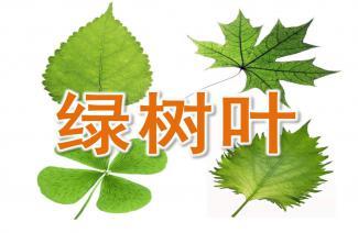 中班语言活动《绿树叶》ppt课件教案图片